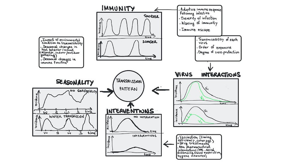 An image or several illustration of graphs and charts talking about immunity, seasonality, interventions, and virus interactions